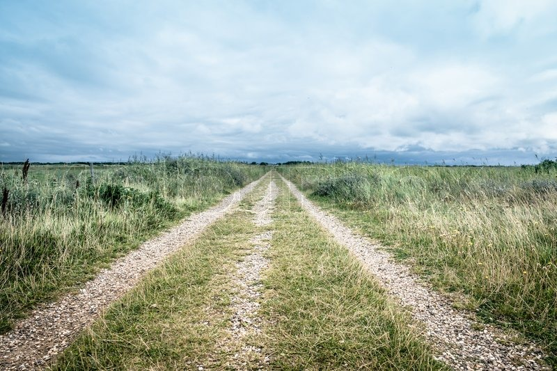 Nature Path Surrounded By Grass And Bush Stock Photo