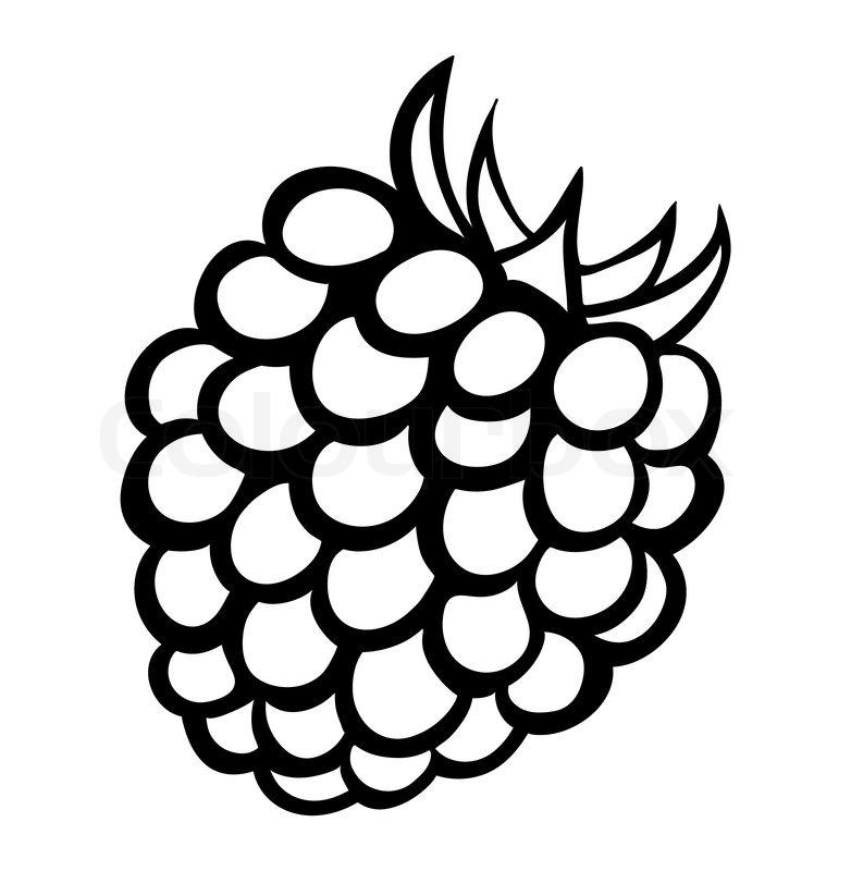 Vector Monochrome Illustration Of Raspberry Logo Vector 7513985 on Fresh Fruit