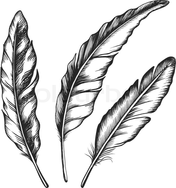 vintage feather set isolated on white   stock vector