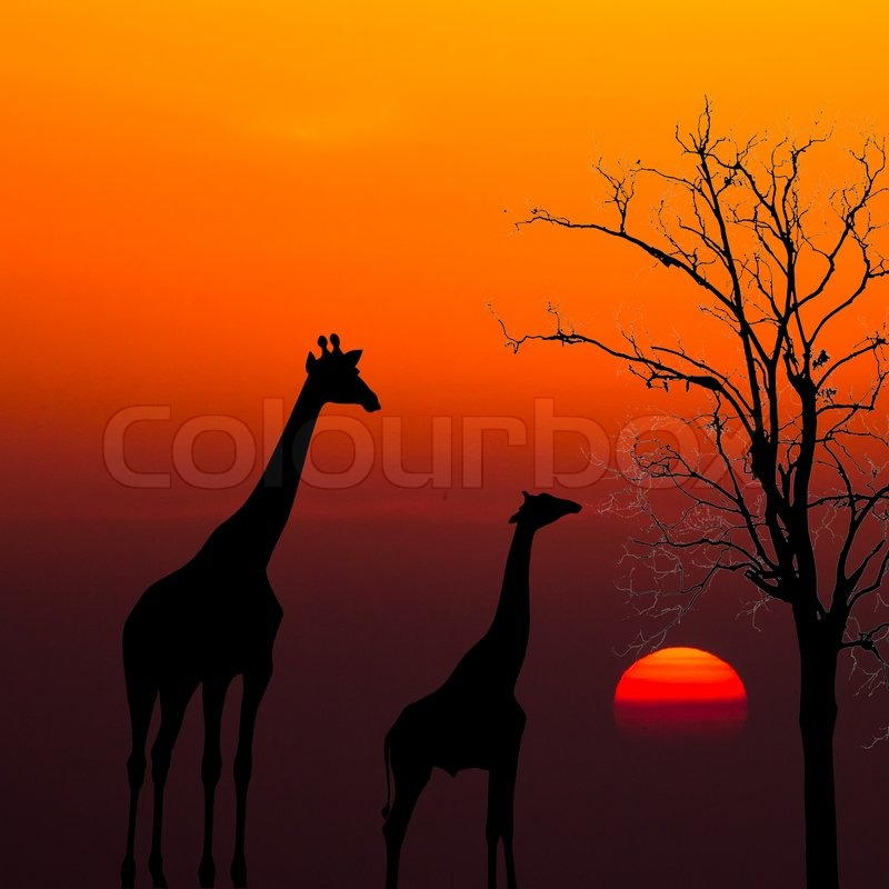 Forest At Dusk Wallpaper: Silhouettes Of Giraffes And Dead Tree ...