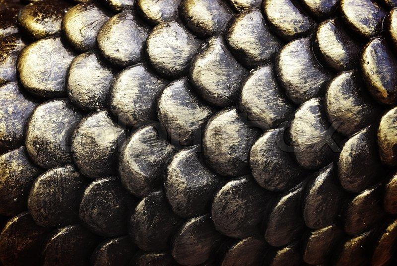 fischschuppen stock bild von textur wikipedia