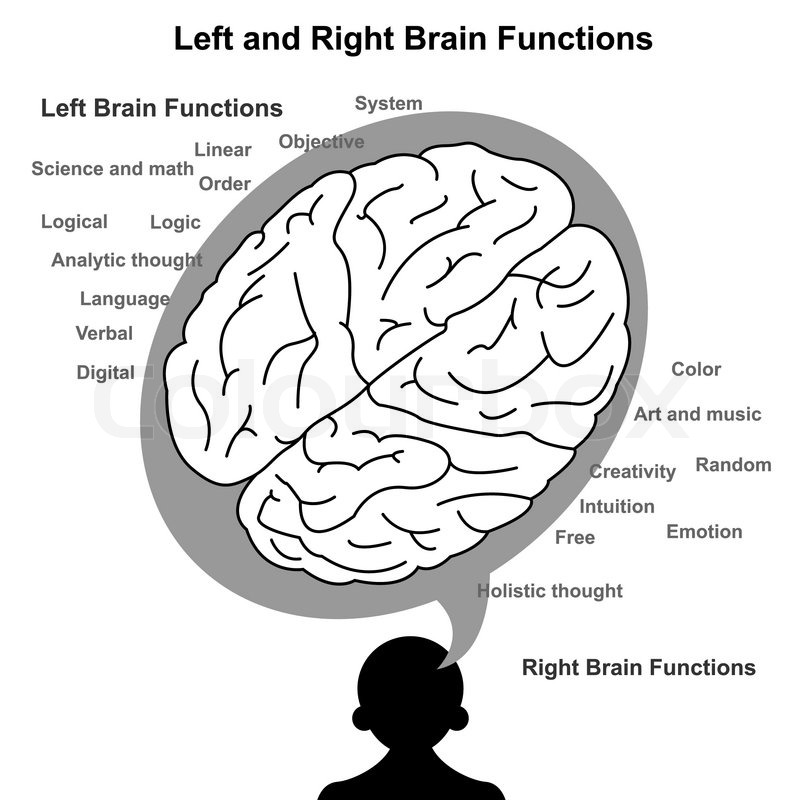 Left and Right brain function illustration   Stock Vector   Colourbox