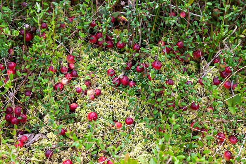 a report of cranberry wilderness