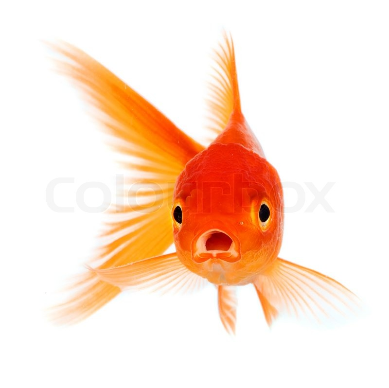Restaurant Goldfish