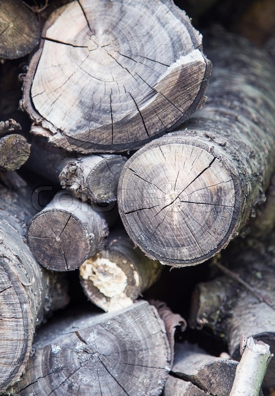Wood circle texture, stock photo