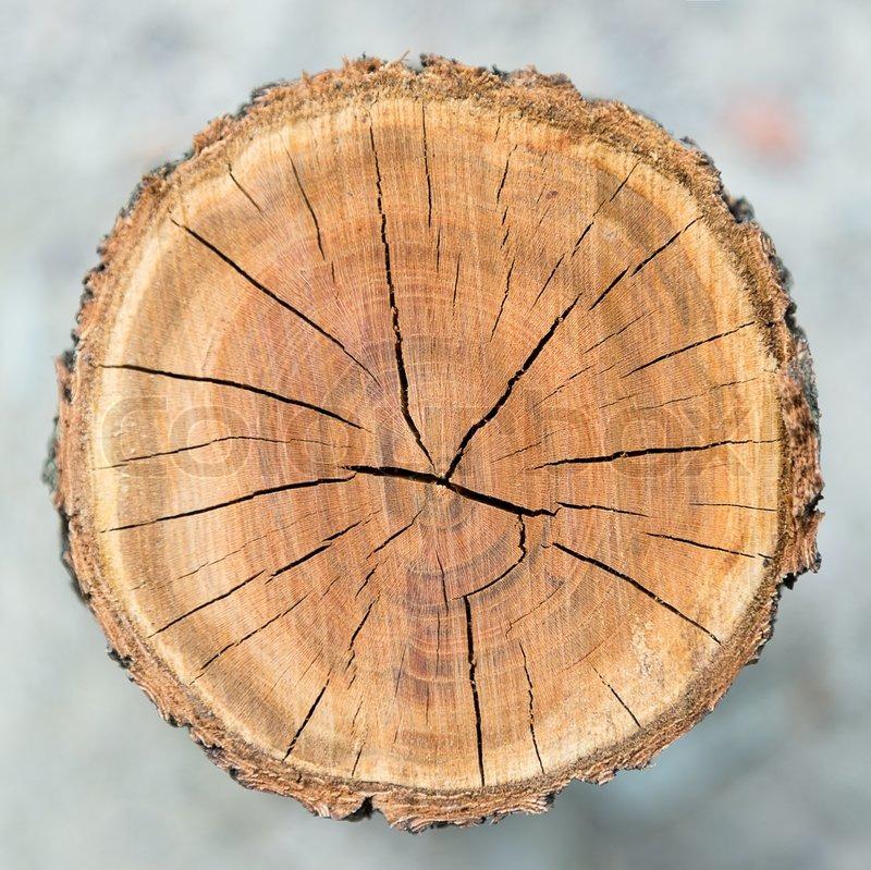 Wood Circle Texture Slice Background