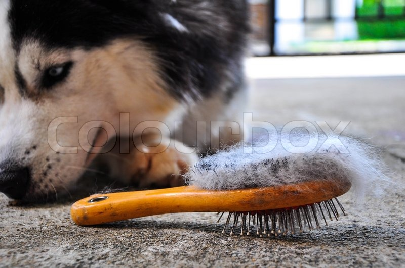 Brush the dog, stock photo