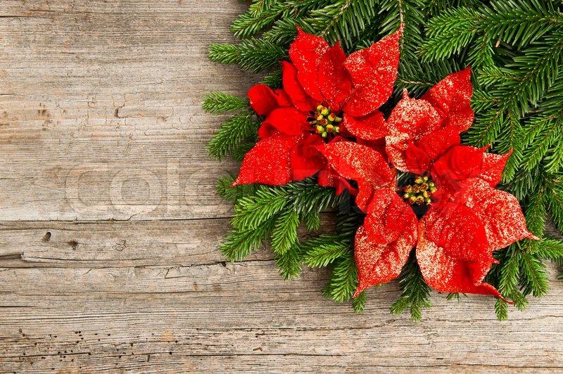sch ne weihnachtsbaum zweig mit roten weihnachtsstern. Black Bedroom Furniture Sets. Home Design Ideas