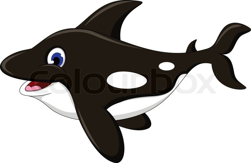 Vector Illustration Of Killer Whale Cartoon