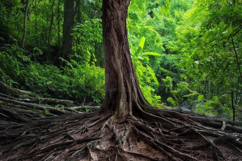 Baum Mit O