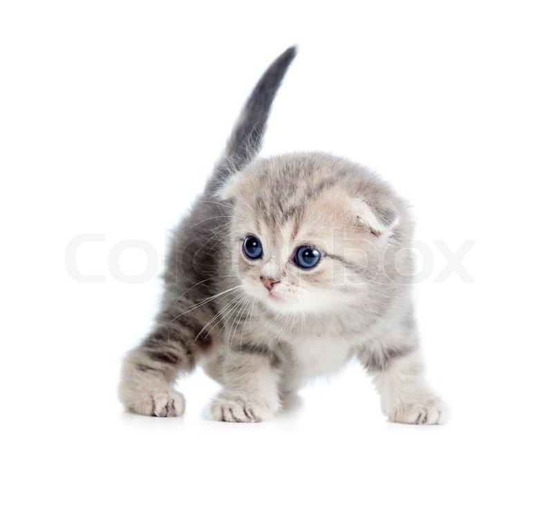 Cat S Vertrag O