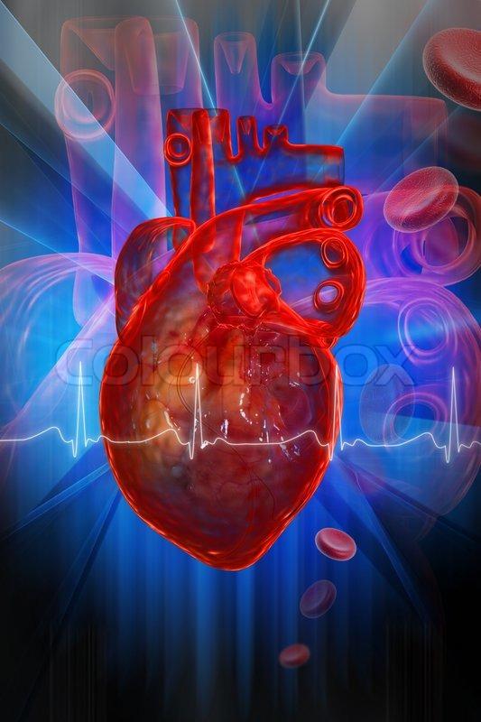 Menschliches Herz mit EKG   Stockfoto   Colourbox