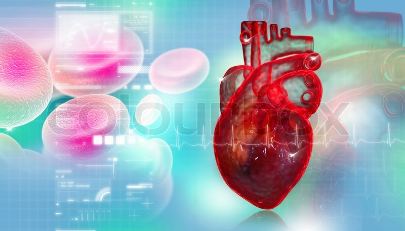 Menschliches Herz mit Blutkörperchen   Stockfoto   Colourbox