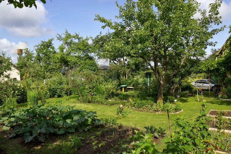Beautiful fun bright summer green sunny garden landscape   Stock ...