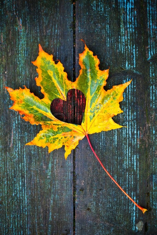 Charmant Fall In Love Photo Metaphor Colorful Maple Leaf With Heart Shaped Hole Lays  On Dark Wooden Table, Stock Photo