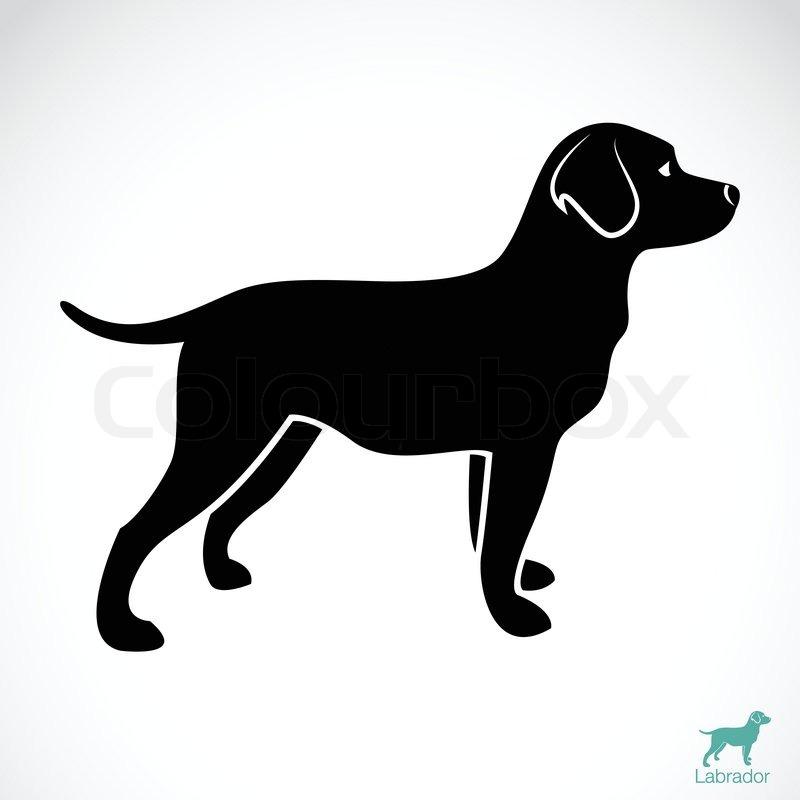 Silouette Of Female Black Lab Dog