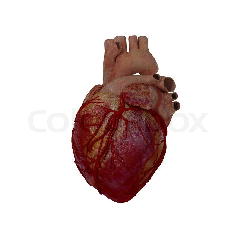 3d gerenderten medizinische Darstellung eines menschlichen Herzens ...