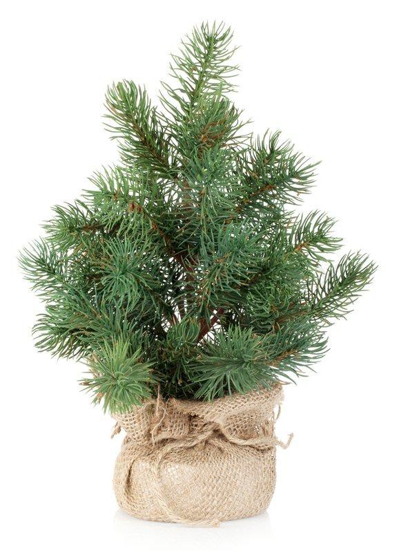 fyrretræ som juletræ
