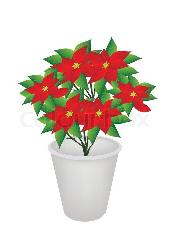 exotische rote blumen pflanze im blumentopf vektorgrafik colourbox. Black Bedroom Furniture Sets. Home Design Ideas