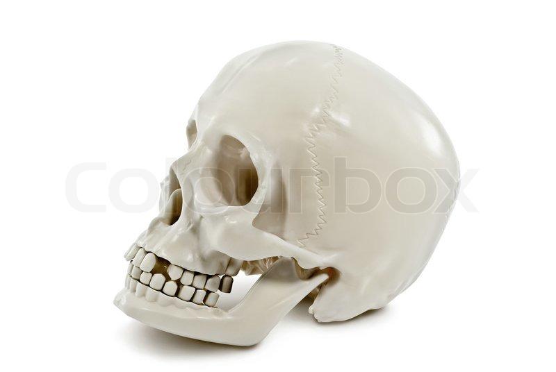 Stock Bild von 'Der menschliche Schädel auf weißem Hintergrund'