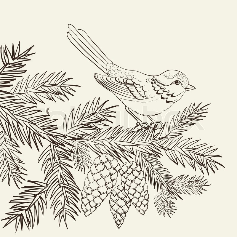 Vogel auf Weihnachten Tanne und Tannenzapfen   Vektorgrafik   Colourbox