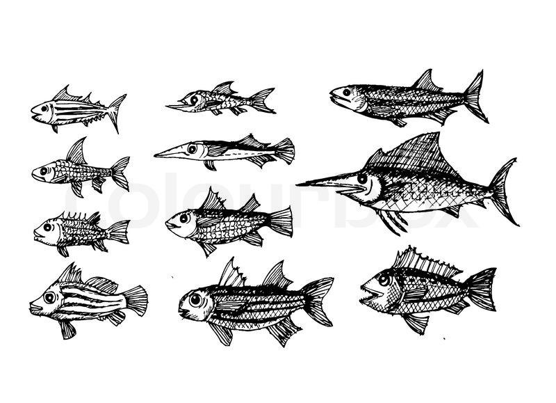 Scorpion Fish Drawing Hand Drawn Fish Vector