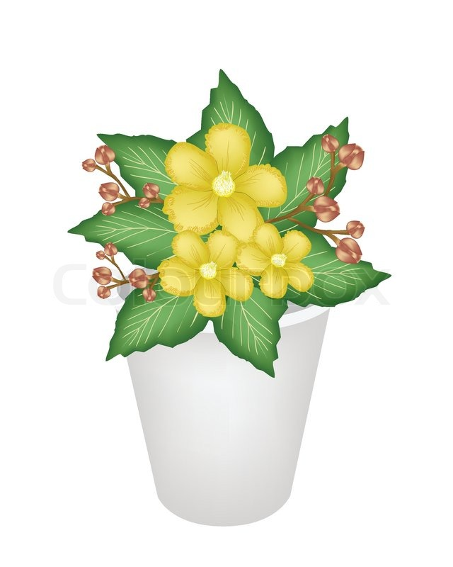 Yellow simpor flowers in a flower pot stock vector colourbox mightylinksfo