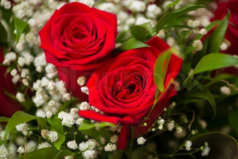 Nice Roses In Celebration Concept Stock Photo Colourbox