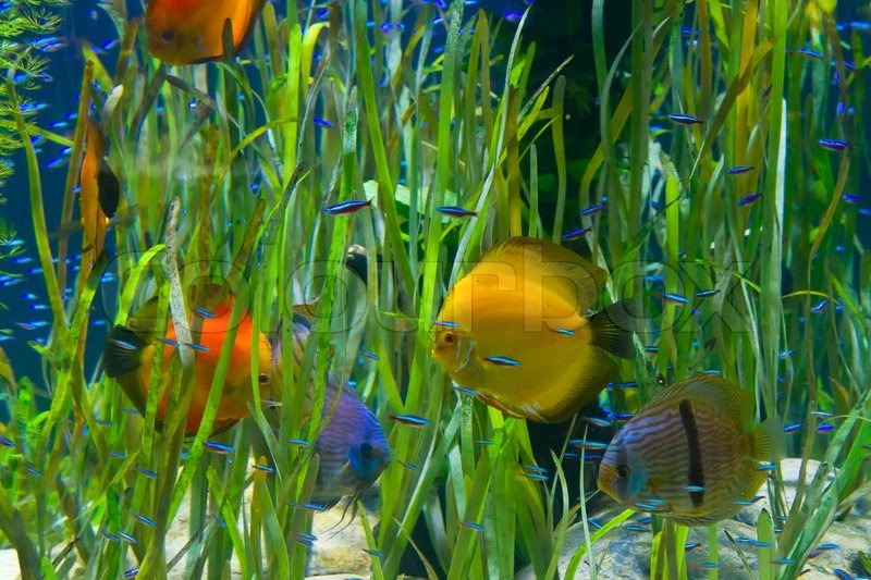 Tropical ocean animals and plants - photo#25