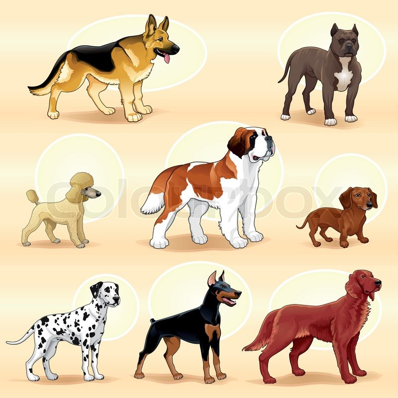 Groups Of Dog. Vector Illustration
