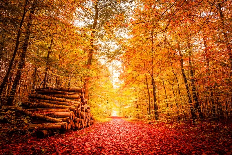 Shoe heaven!!!!  8081126-autumn-forest-with-golden-colors