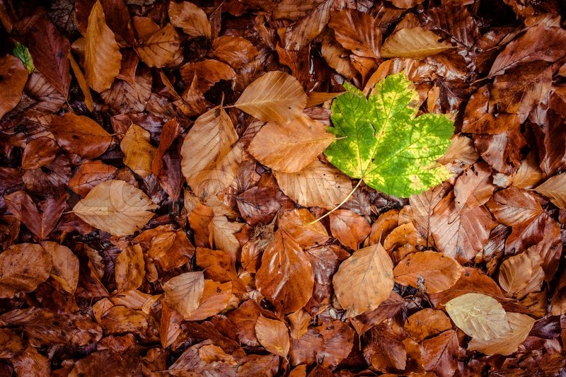Fallen leaf in grass at autumn time | Stock image | Colourbox