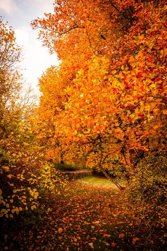 Beautiful Autumn Landscape In Warm Colors Stock Photo