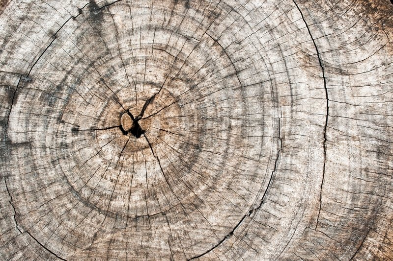 Rough Wooden Cut Texture And Cracks Stock Photo