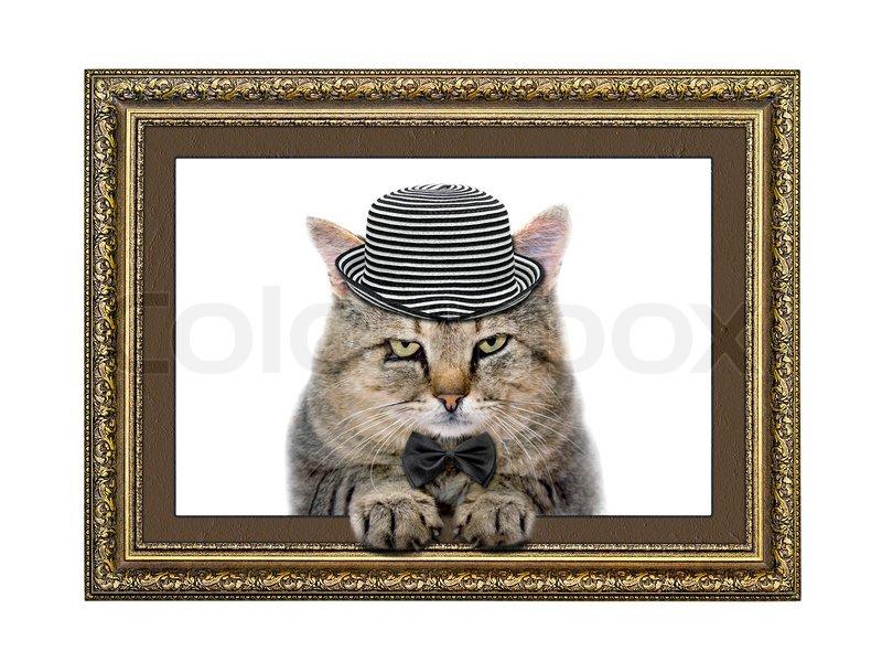 Katze im Hut und Fliege schaut aus dem Bilderrahmen | Stockfoto ...