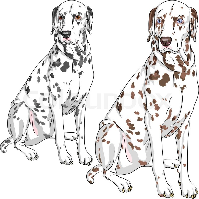 What Are The Two Dogs Names In  Dalmatians