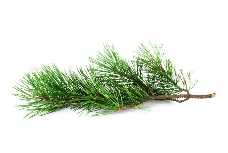 White Christmas Twig Tree