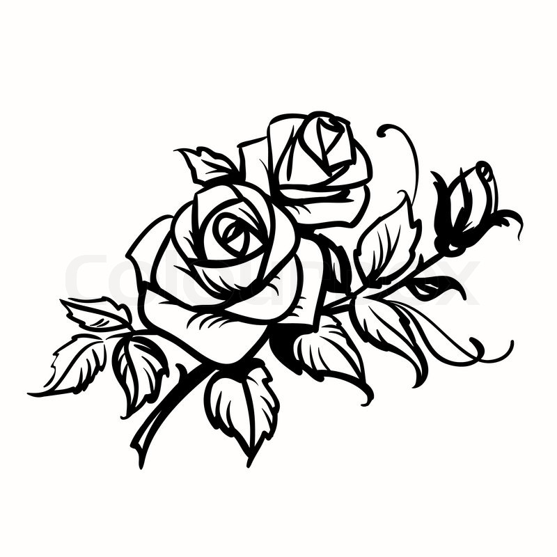 roses black outline drawing on white background stock vector rh colourbox com roses vector image roses vectoriel