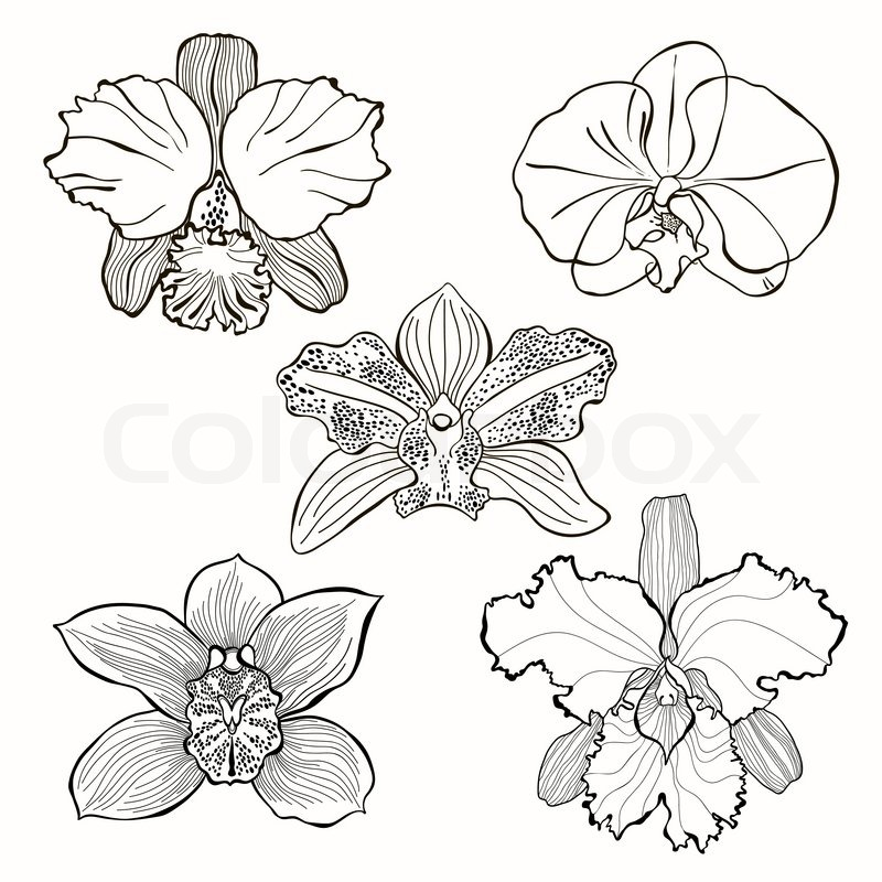 Hand drawn orchid flowers vector set stock vector colourbox - Dessin d orchidee ...
