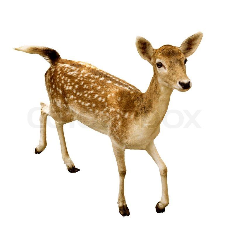 Property Management Red Deer