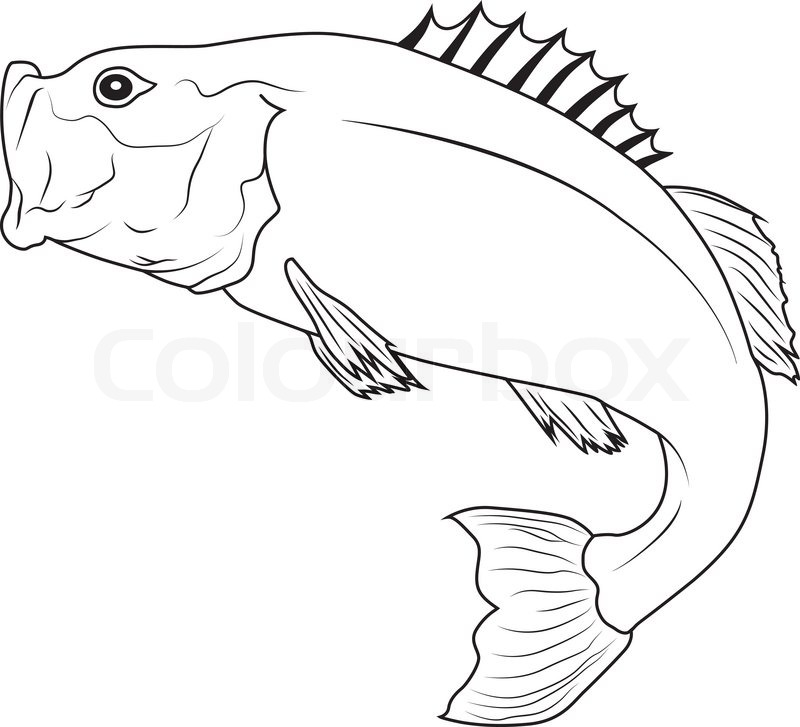 Outline Bass Fish