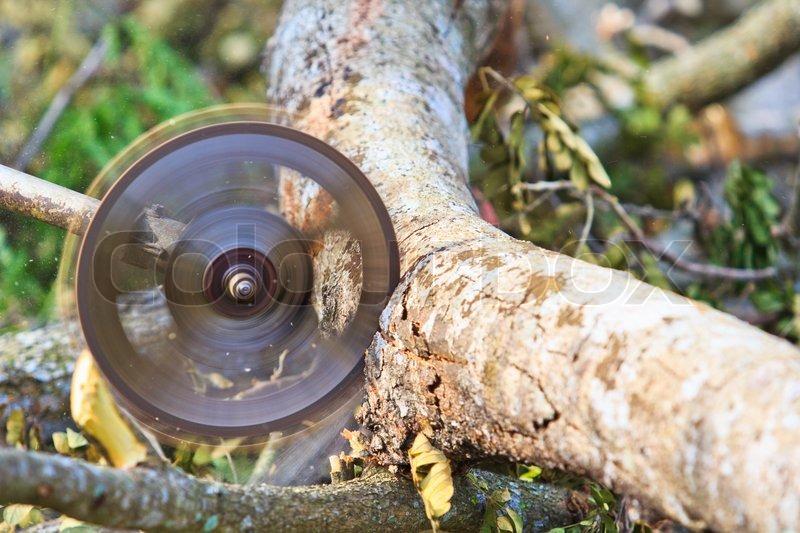 Gemeinsame Man Schneiden Stück Holz Schneiden von | Stock Bild | Colourbox @SI_49