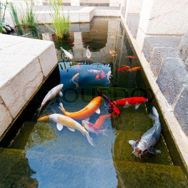 Fische von koi teich stockfoto colourbox for Koi karpfen teich