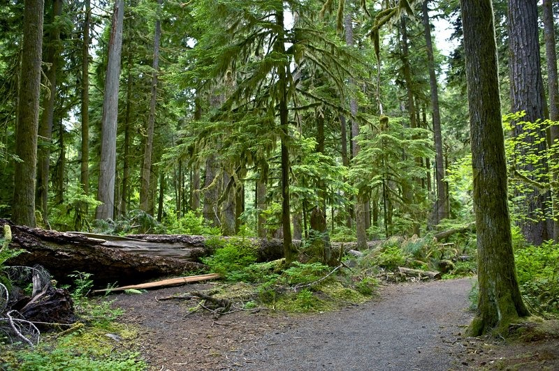 Montana Forest Stock Photo Colourbox