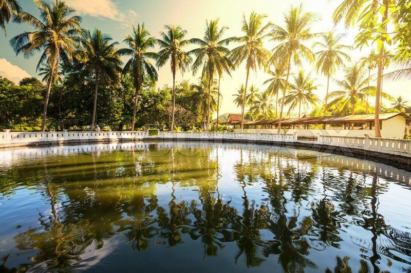 Pool in tropical garden, stock photo