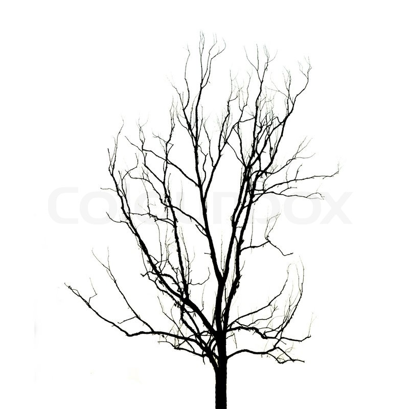 a dead limb on the quasi judicial tree Fourth periodic report of the united  have been recognized as inherently suspect or quasi-suspect and therefore have been subjected to more exacting judicial .