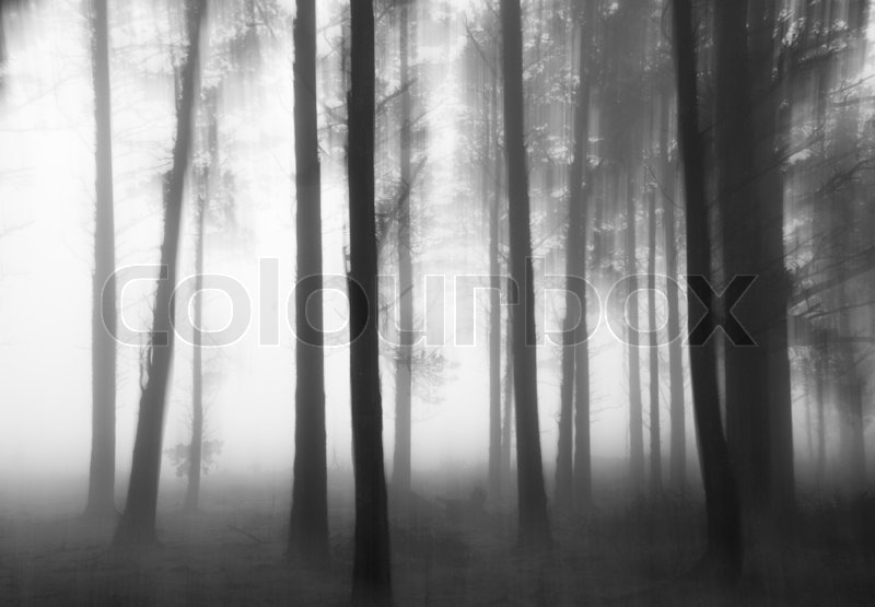 Stock image of 'Black and white photograph of a disturbing forest'