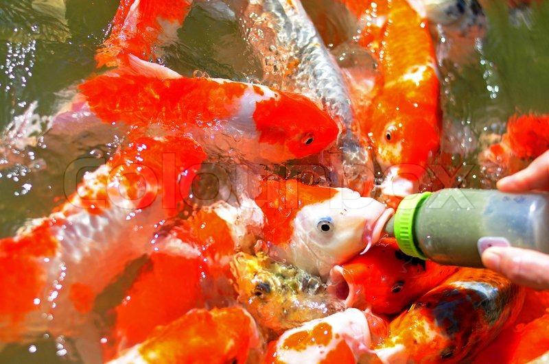 Как выбрать корм именно для вашей рыбы какой корм подойдет именно вам: при этом рыбу измеряют и взвешивают, результаты записывают в журнал учёта.