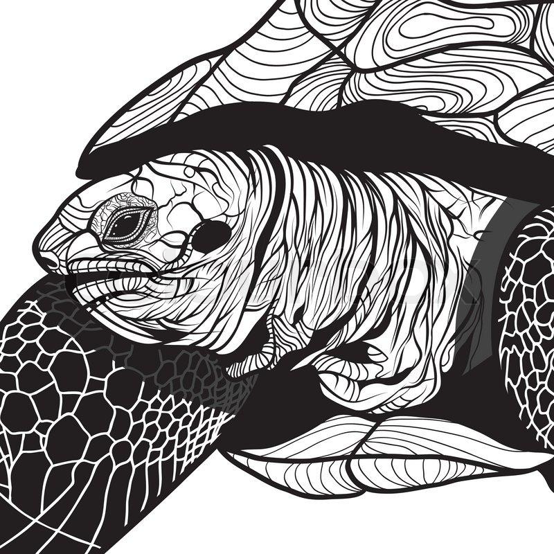 Turtle Animal Head Symbol For Mascot Or Emblem Design Logo Vector