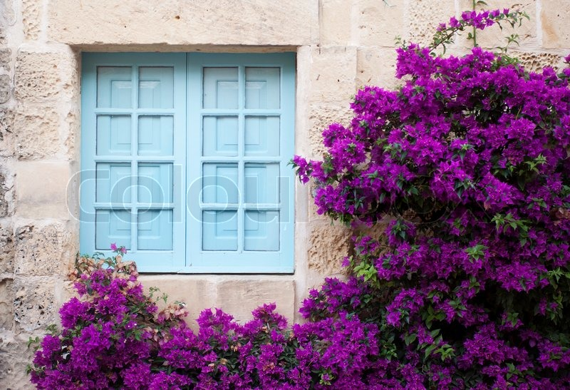 alte fassade mit blauen fenster und lila blumen stockfoto colourbox. Black Bedroom Furniture Sets. Home Design Ideas